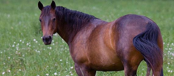 Картинки по запросу lyme disease horses
