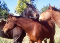 Herd bonding