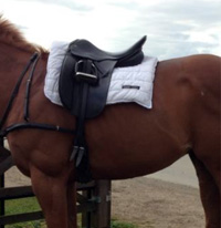 A famous rider's name doesn't doesn't make this saddle fit