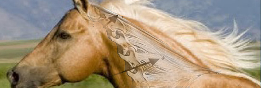 The Disturbing Truth About Neck Threadworms and Your Itchy Horse