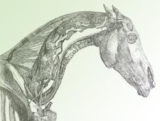 George Stubbs illustration