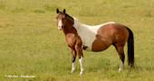 Is Your Mare Having a First or a Third World Pregnancy?