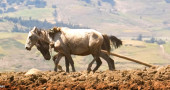 Why It Matters To 112 Million Working Equines That You Read This Post
