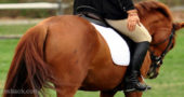 5 Ways Your Seat Can Screw Up Your Horse Without You Even Noticing