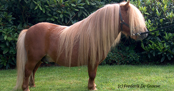 Problem Of Dwarfism In Horses